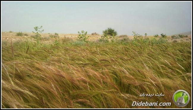 khordad-9333
