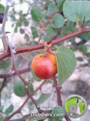 عکس هایی زیبا از طبیعت دیده بان ارسالی از سجاد رسولی